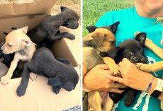 9 Hungry Puppies Sealed In A Tight Box, Dumped Near A Bridge Without Their Mama