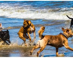Officials Warn Pet Parents What Cost 2 Dogs Their Lives During Beach Visit