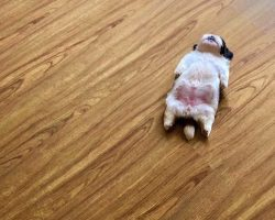 Meet Paningning, The Tiny Pup Who Sleeps As If She Were 'Switched Off'