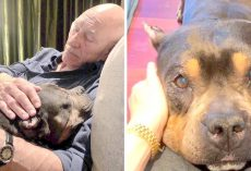 Patrick Stewart Struggles To Cope As His Senior Foster Dog Loses Battle With Illness