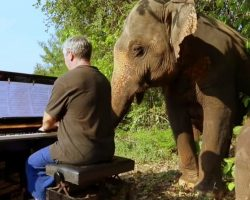 Pianist On A Mission To Help Hurting Elephants, Plays Music To Soothe Their Souls