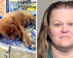 She Allegedly Left Puppies In Hot Sun Without Water, One Pup Dead & Rest Critical