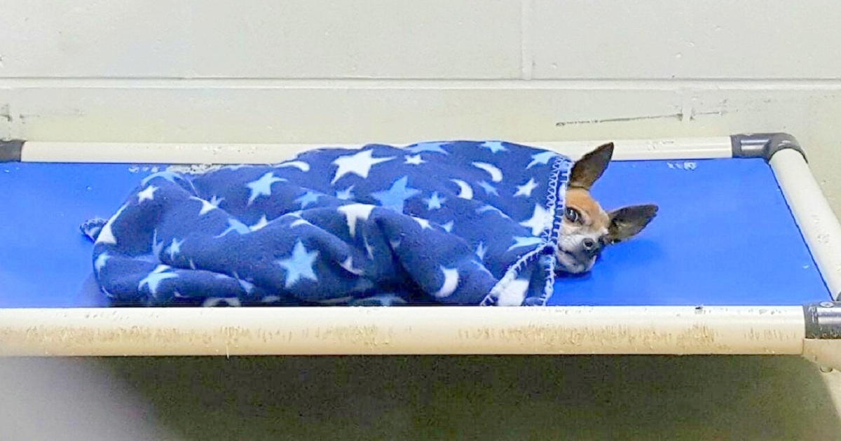 Old Dog Moved To Shelter After Owner's Death, Tucks Himself & Cries To Sleep Daily