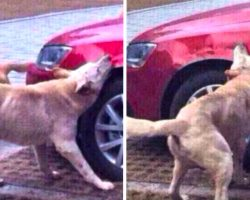 Stray Dog Returns With Friends To Tear Up The Car Of The Man Who Kicked Him