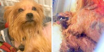 Owner Leaves 2 Dogs Locked In Crate In Hot Sun, One Dog Dies & Other Critical