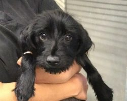 This Pup Is Set To Be Put Down As She Fails To Get Adopted Due To Her Coat Color