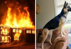 Fire Breaks Out In Dead Of The Night, Brave Rescue Dog Risks Life To Save Family