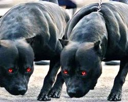 10 Guard Dogs You Don't Want To Mess With
