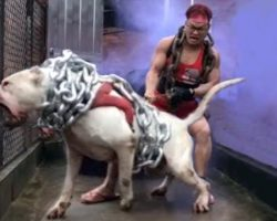 10 Most Aggressive Dogs You Should Avoid