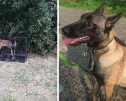 Dog Found Locked In A Cage With Nothing Near A Carpool Pickup Area
