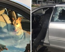 Owner Angry With Cop After He Smashes Window To Save Dog From Hot Car