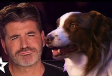 Simon Cowell's FAVORITE Dog Auditions On Got Talent!