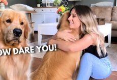 What Happens When You're Hugging Another Dog Too Long? Jealous Dog's Reaction Is PRICELESS!