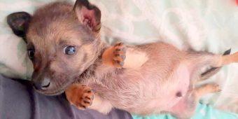 6-Week-Old Puppy Rescued From Kids Throwing Rocks at Him