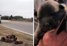 Monster Throws Newborn Puppies Out Of A Moving Car Window