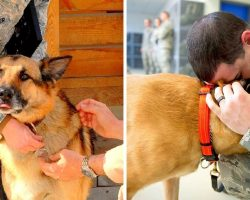 Air Force Is Desperately Looking For People To Adopt Some Of The Retired Military Working Dogs