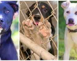 No Kill Animal Shelter Desperately Looking For People To Adopt Dogs About To Be Euthanized