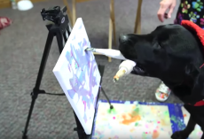 Dog That Failed Service Training Makes $1,000s With Artwork