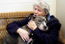 Elderly Nuns Adopt Aging Pit Bull. I'm In Tears…