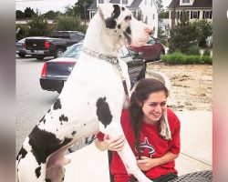 Great Dane Pouts Until Mom Gives Him A Morning Hug