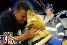 How 9/11 Firefighter Met His Service Dog