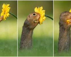 Photographer Captures Squirrel Smelling Flowers In Adorable Pics