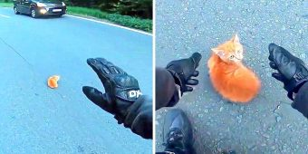 Quick-Thinking Motorcyclist Saves Tiny Kitten From Getting Run Over On Busy Freeway