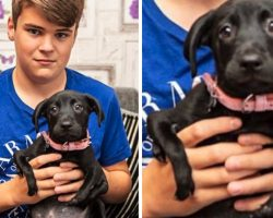 Puppy Born With 6 Legs Adopted By Boy Who Knows Bullying All Too Well
