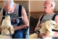 'I feel alive inside again': Service Dog Helps Vietnam Veteran Deal with PTSD