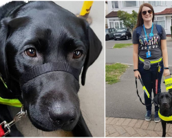22-Year-Old Blind Woman Was Told To Take Her Guide Dog Off The 'F***ing Bus'
