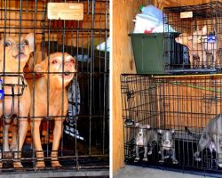 Lousy Crook Locks 7 Dogs In Tiny Storage Unit With No Food, Water Or Ventilation