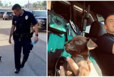 """Pint-Sized"" Pup Joins The Police Department After 2 Officers Saved Him While On Patrol"