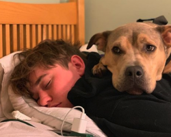 Adopted Dog Was Afraid Of Everything And One Night With His Brother Changed All