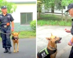 Cop Sees Retired K9 Dogs Living In Pure Misery, So He Builds Them A Cozy Home