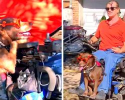 """Paralyzed Man Humiliated As McDonald's Kicks Him Out Due To """"Smelly"""" Service Dog"""