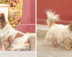 Blind Dog Had No Idea Her Owner Abandoned Her And Kept Waiting In Same Spot For 10 Years