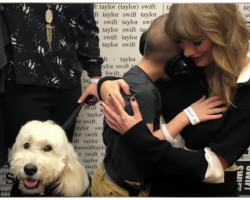 Boy With Autism Saving Up For Service Dog Gets Huge Donation From Celebrity