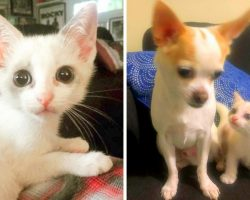 Sad Kitten Drags Herself With A Painful Limp, Begs Woman & Her Dog To Adopt Her
