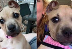 Dog With 'Cinnamon Roll' Ears Rescued As Part Of An Abandoned Litter