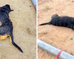 Psycho Captures Family's Dog & Beats Him To Death, Ties His Collar Like A Trophy