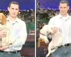 """Dad Brings Beagle On The David Letterman Show And Asked Him To """"Play Dead"""""""