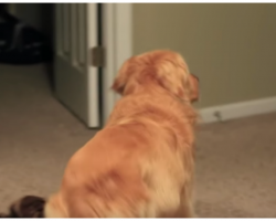 "Dad Pointed His Camera At The Door Knowing His Dog Was In For A ""Reunion Of A Lifetime"""