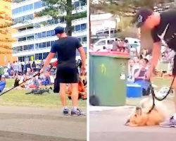 """Dog Didn't Want To Go Home From The Park And Played Dead As Crowd """"Cheers Him On"""""""