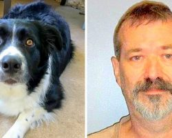 Dog Dies After Vicious Neighbor Stabs His Belly With Pocketknife Multiple Times