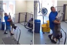 Negligent Groomer Seen Dragging Distressed Dog By Legs & Violently Pulling His Neck