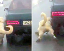 Evil Man Drags Dog Alongside Car, Dog Cries In Extreme Pain And Finally Collapses