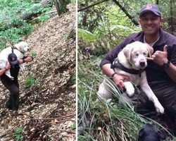 Firefighter Rescues A Blind Dog That Was Lost In Wood For 8 Days