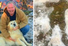 Golden Retriever Lay By Unconscious Owner For 20 Hours Saving His Life