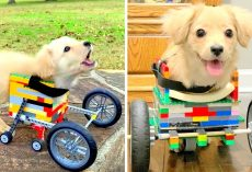 Dumped Disabled Puppy Smiles Again After 12-Yr-Old Boy Builds Her A Lego Wheelchair