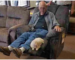 Grandpa Brings His Dog To Furniture Store To Make Sure She Liked The Chair Too